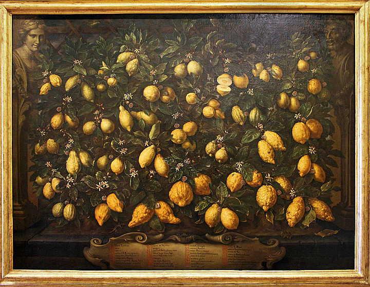 Bimbi: Zitronen