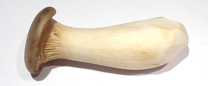 kräuterseitling