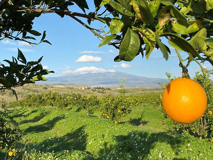 orangenhain vor ätna