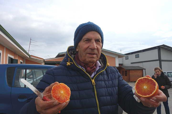 orangen arcoria