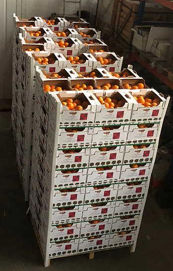 orangen tarocco versandfertig
