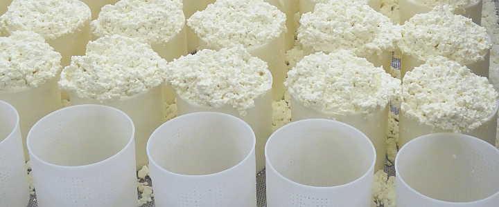 Pecorino-Herstellung