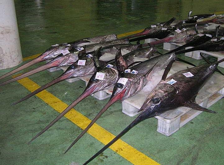 schwertfische